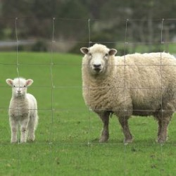 Grillage à mouton 50m